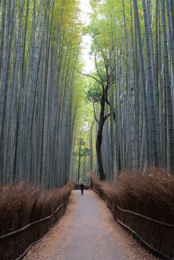 Impact Group bamboo tree
